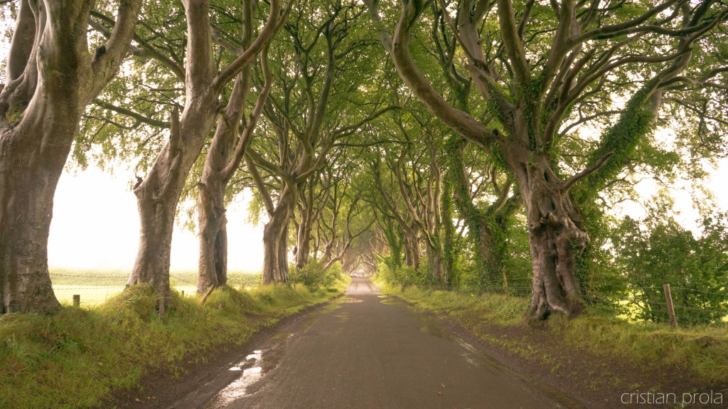 The Dark Hedges, Irlanda del Nord