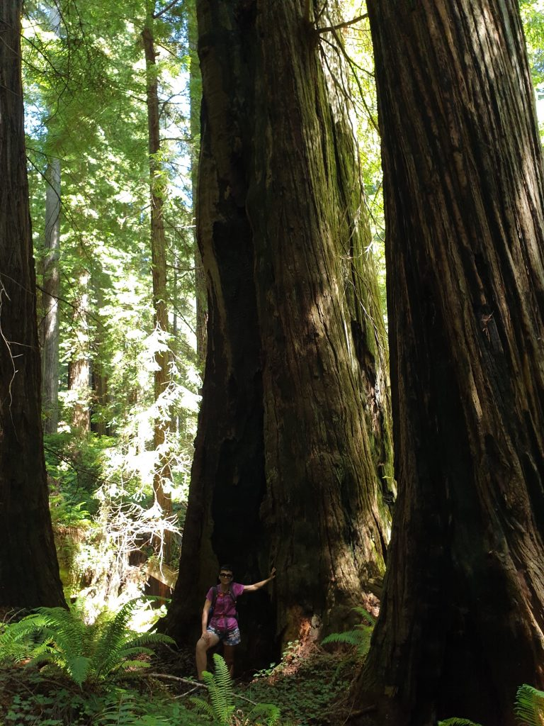 Un trail del Redwood National and State Park